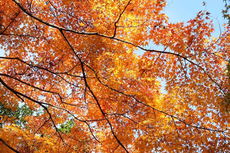 Bert Barten: 'In de natuur gaat alles langzaam. Een boom ademt bijvoorbeeld maar een keer per dag.' Beeld Shutterstock