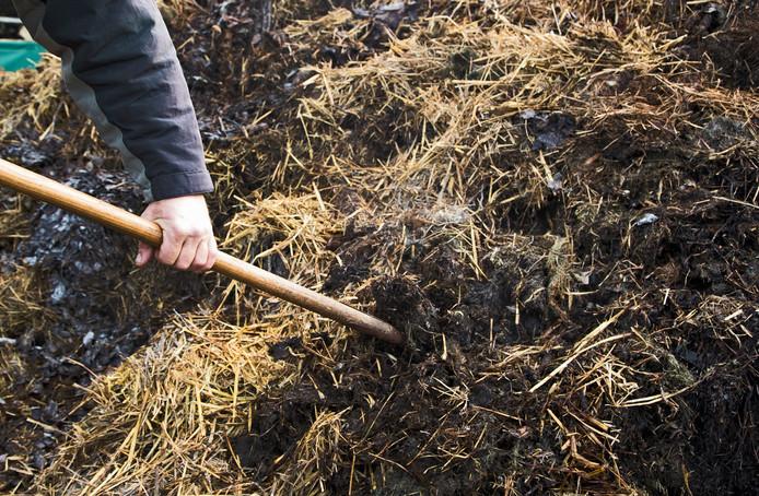 2016-10-20 11:31:46 BUNNIK -  Een boer schept mest bij een melkveehouder in Bunnik. Uit onderzoeken van het Centraal Bureau voor de Statistiek (CBS) blijkt dat de fosfaatproductie die wordt veroorzaakt door de Nederlandse veestapel grotendeels wordt veroorzaakt door de melkveehouderij. ANP XTRA KOEN SUYK