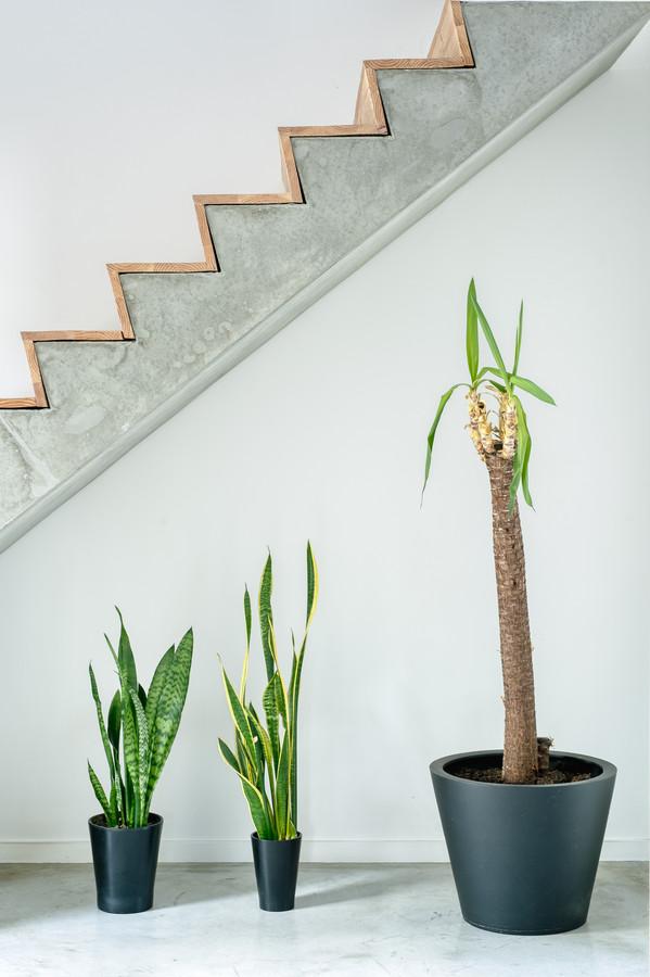 Karels broer is schrijnwerker en bekleedde de betonnen trap met hout.