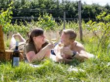 Borrelen tussen de wijnranken: in Wageningen kan het deze zomer