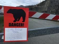 Alaska kampt met agressieve beren: vier aanvallen in een maand tijd