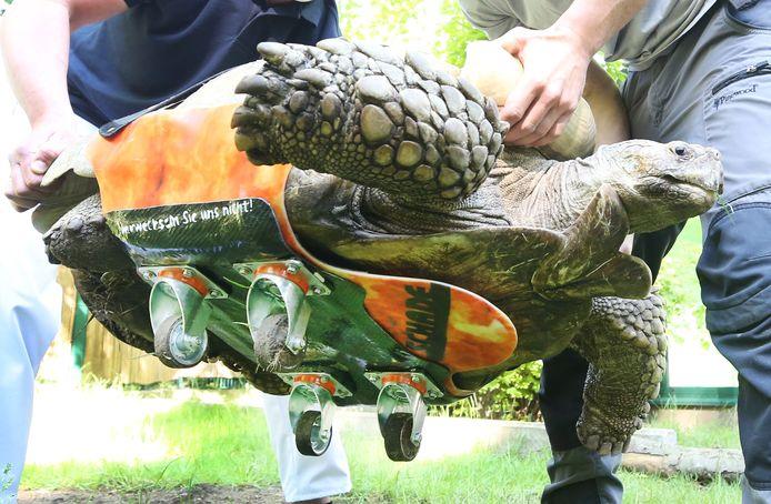 Helmuth de schildpad met zijn speciaal aangepast skateboard.