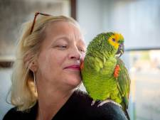 Papegaai Chico uit Arnhem is terecht na vliegavontuur tot Beneden-Leeuwen