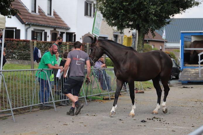 De winnaar van de prijskamp voor paarden.