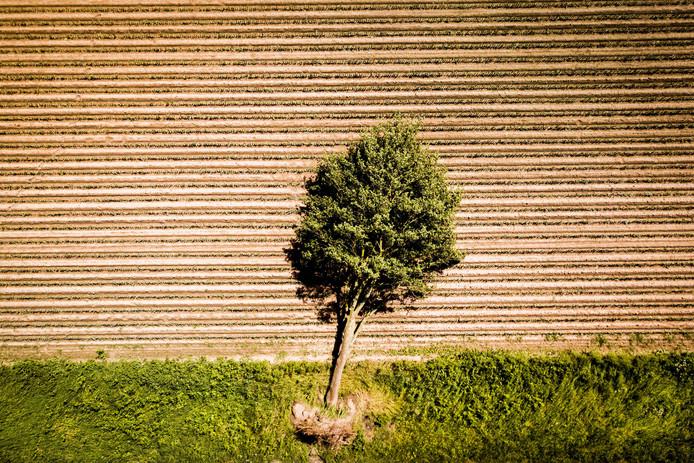 Foto gemaakt met een drone van omgewaaide bomen in Schwalmtal, net over de Duitse grens bij Venlo, waar een tornado grote schade heeft aangericht. FOTO SEM VAN DER WAL