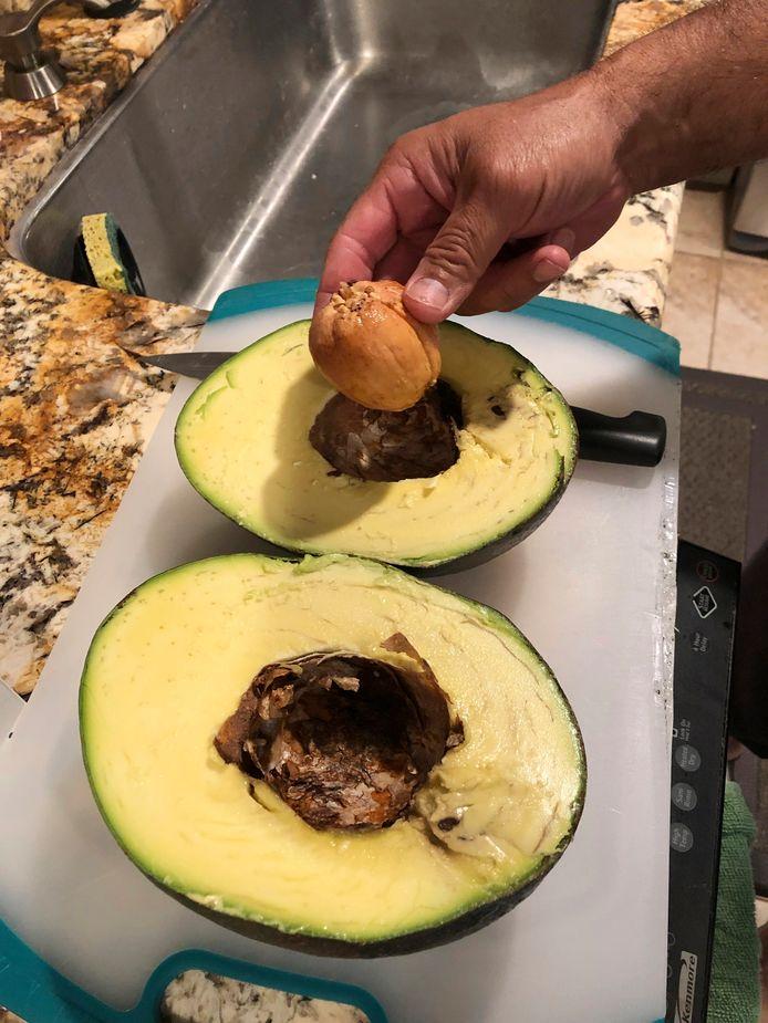 De avocado-kolos.