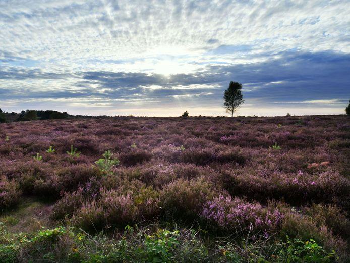 De Sallandse Heuvelrug is volgens landschapsarchitect Van Nieuwenhuijze een ideaal gebied om als een 'hydrologisch eiland' enorme hoeveelheden water in op te slaan.