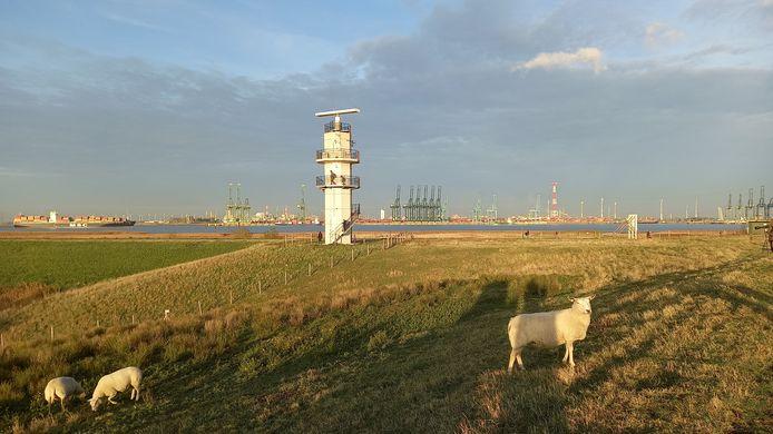 Het uitkijkplatform op de radartoren in Prosperpolder is al door veel wandelaars ontdekt.