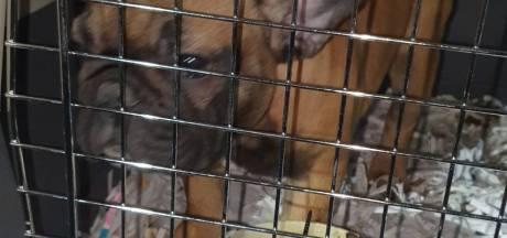 Meer dan dertig in een klein transportbusje gepropte puppy's bevrijd