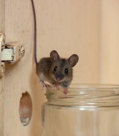 Zo schrik je de muizen op een vriendelijke manier af