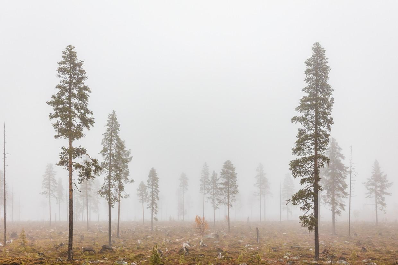 Een natuurgebied zo groot als Denemarken is de laatste jaren opgeofferd voor wat het 'Zweedse bosbouwmodel' heet. Beeld Marcus Westberg