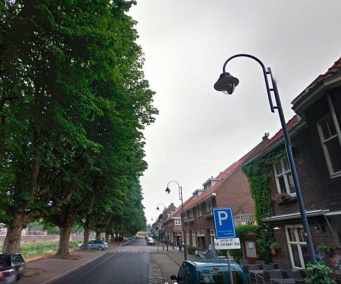 Kastanjebomen langs de Van der Weeghensingel