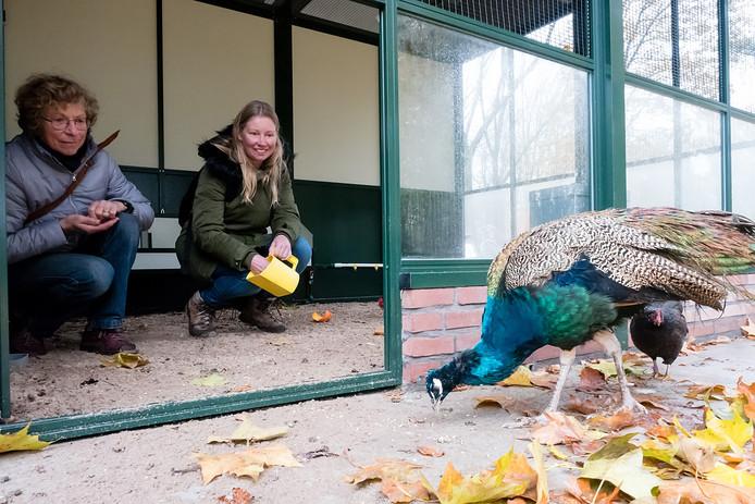 Hoewel kinderboerderij Bospark onlangs in opgeknapt, met onder meer een nieuwe volière, wil het Alphense college er toch vanaf. Alleen het hertenkamp zou dan overblijven.