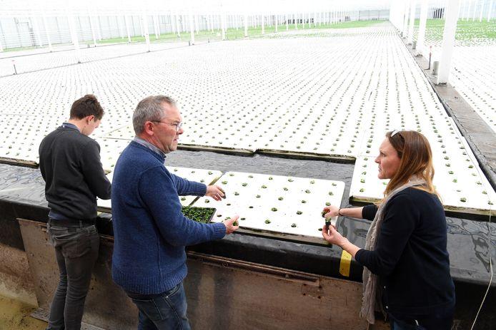 ETTEN LEUR  Jan Stads / Pix4Profs Van West-Brabantse bodem bij  De kruidenaer BV in Etten-Leur. De Kruidenaer staat garant voor verse kruiden voor fijnproevers!