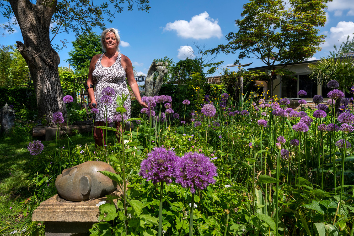 Marjo Wiltingh tussen de paarse uienbollen in haar tuin in Doornenburg. Foto: Gerard Burgers