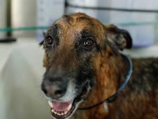 Bien-être animal: jusqu'à 10.000 euros d'amende en cas de maltraitance