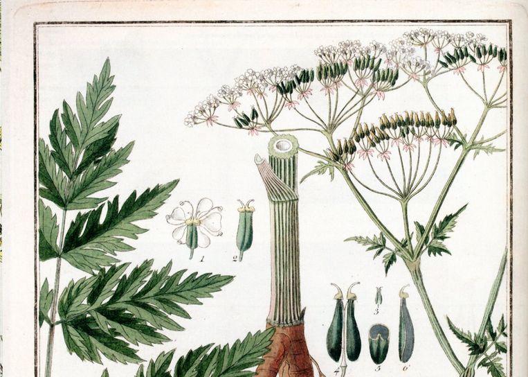 Beeld uit  'Historia naturalis'. Beeld