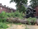 Gevaarlijke boom in Breda laat al vier keer een tak vallen en gaat nu eindelijk om