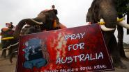 Thaise olifanten houden stille mars voor Australië