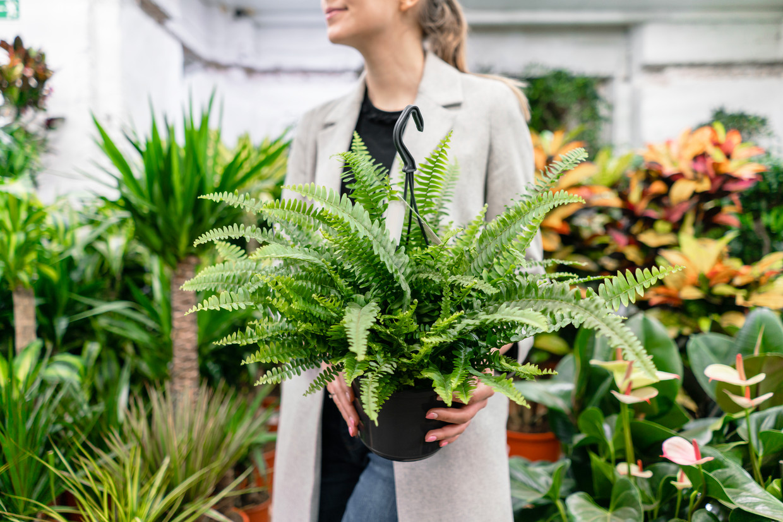 Vrouw plant tuincentrum Beeld Getty Images