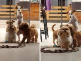 Hondjes bundelen krachten om deur van baasje te openen