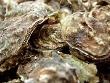 Beroepsvisser betrapt met 677 kilo illegaal geraapte oesters