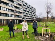 Straf cijfer: 15.390 nieuwe bomen geplant in Brugge in twee jaar tijd