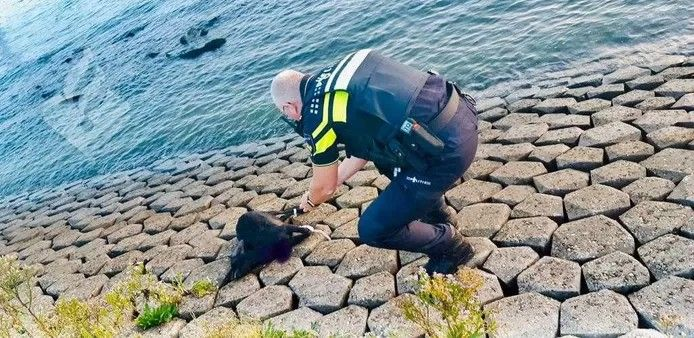 Archiefbeeld ter illustratie: Vorig jaar werd in Maassluis een geit met vastgebonden poten dood aangetroffen
