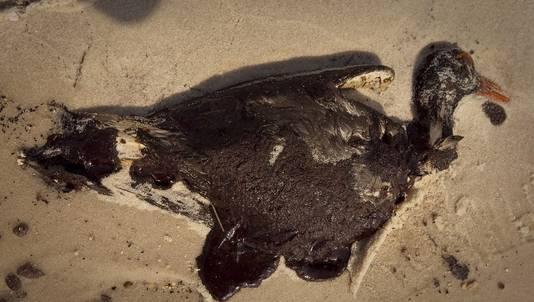 Een met olie besmeurde vogel op een strand aan de Golf van Mexico in juli 2010.