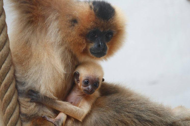 Kawaii met zijn mama.