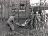Over een masturberende sergeant-majoor en de Amazing Stroopwafels