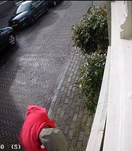 Het palmboompje van Marloes stond in Zutphen een half uurtje tegen de gevel en toen was het al weg