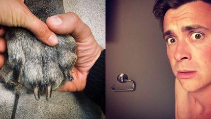 SHOWBITS. An Lemmens neemt afscheid van hond en Niels Destadsbader zit met een sanitair probleem