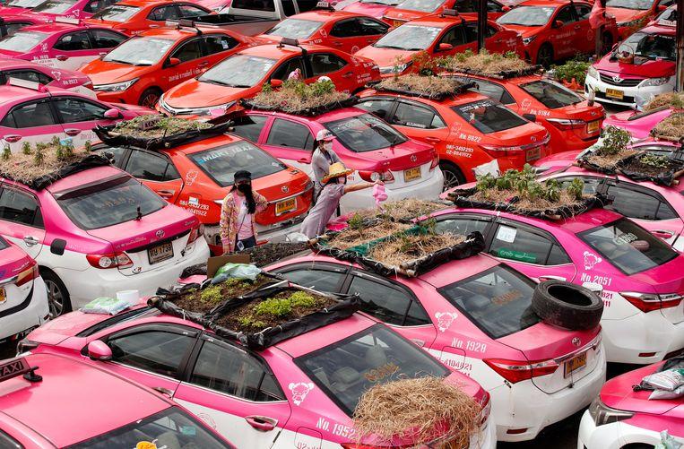 Nu toeristen in Thailand wegblijven vanwege de pandemie, kunnen veel taxibestuurders de huur van hun wagen niet meer betalen. Hun auto's zijn werkeloos achtergebleven op een parkeerplaats in Bangkok. Medewerkers van het taxiverhuurbedrijf zijn er groenten op gaan verbouwen, als tijdverdrijf en om wat voedsel te kunnen verdelen onder collega's. Beeld EPA