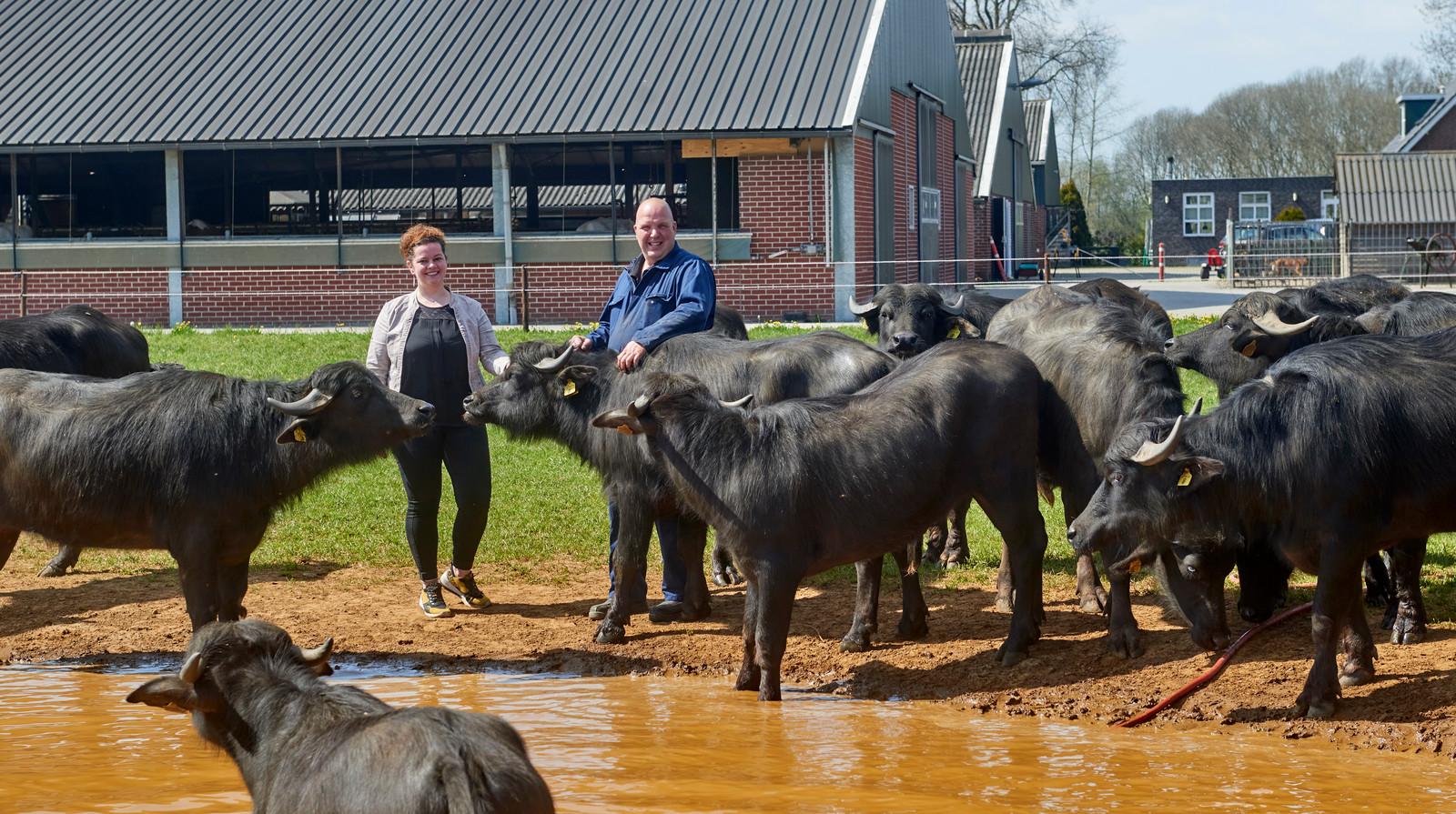 Jan en Lian van den Hurk bij hun waterbuffels. Op de achtergrond de melkveestal.