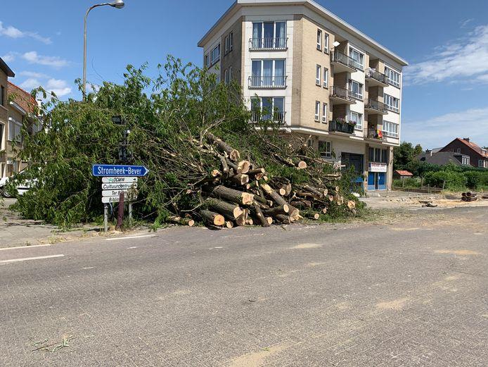 Bomenkap Sint-Annalaan Strombeek-Bever Grimbergen