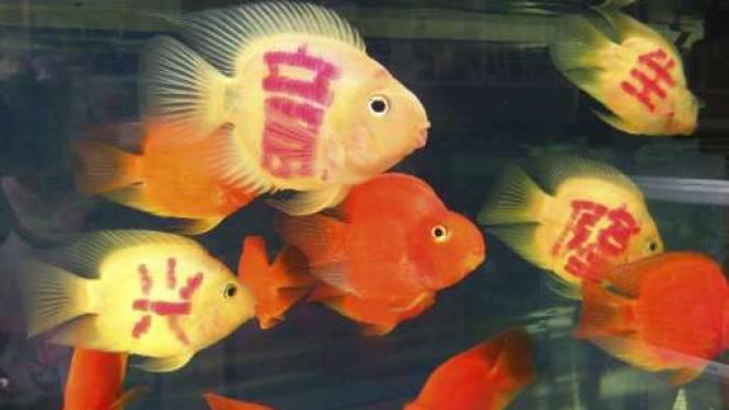 Chinese dierenwinkel verkoopt getatoeëerde geluksvisjes