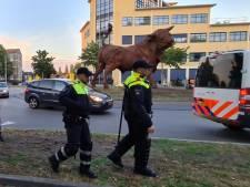 In Den Haag en Utrecht relde de jeugd in probleemwijken, in Amersfoort bij een rotonde. Waarom hier?