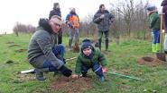 Nieuw bos aangeplant in Broevink