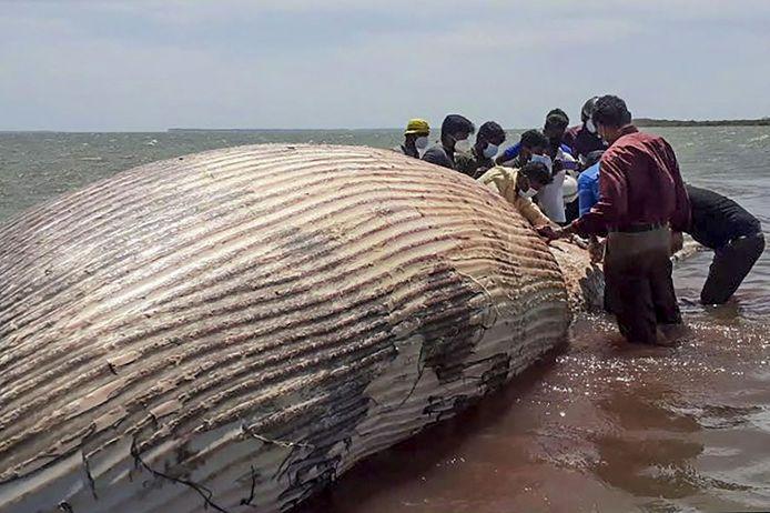 Ook deze blauwe vinvis werd mogelijk het slachtoffer van de ramp.
