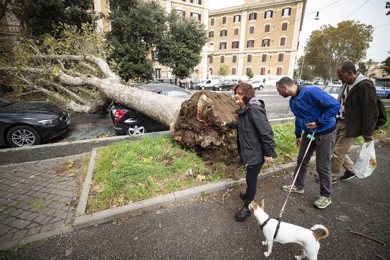 Een ontwortelde boom in Rome. Beeld EPA
