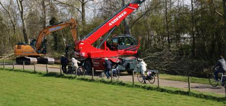 Passanten boos en verbaasd over bomenkap in broedseizoen