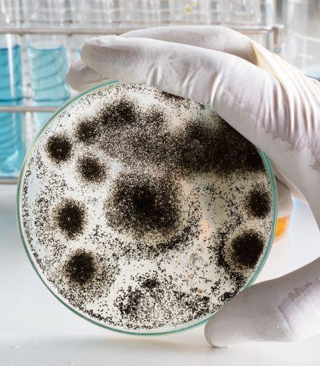 'In onze darmen zitten meer micro-organismen dan er in het universum sterren zijn'