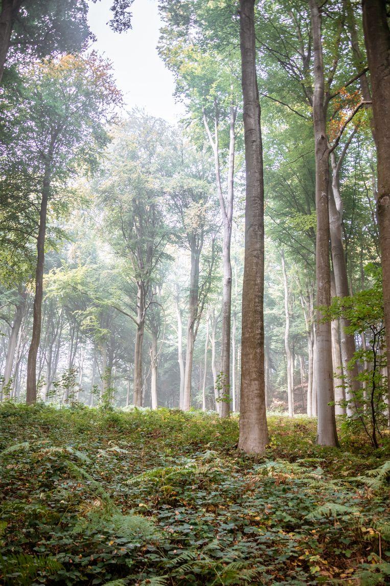 In het bos van Ronse beleeft u een 'Alice in Wonderland'-achtige ervaring.  Beeld RV