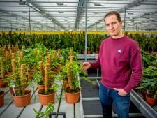 Deze kamerplant zit vol gaten, maar is wel uiterst zeldzaam: een stek kost 1000 euro