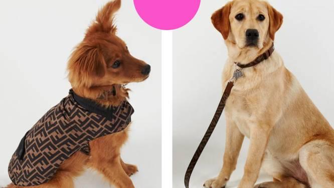 De nieuwste collectie van luxemerk Fendi is er eentje voor honden