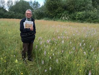 """Op stap door De Swal, zeker 99 jaar langer natuurgebied: """"De bloemenpracht is nu op zijn mooist"""""""