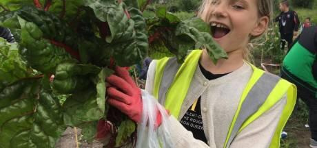 Trotse koppies in Wijktuin Rokkeveen: 'Geweldig, als ze een enorme aardappel uit de grond trekken'
