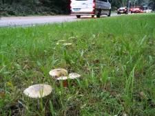 Na twee droge zomers regent het paddenstoelen