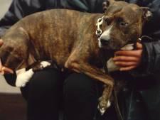 Hondencontroleurs gaan op pad in Gouda